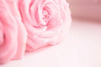 Tajomstvo ruže